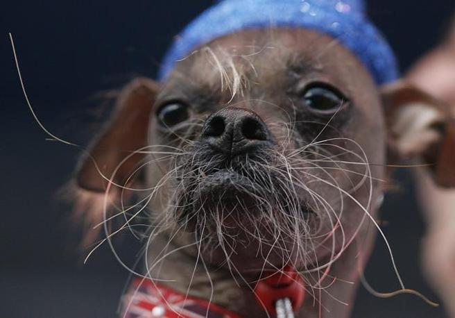 World ugliest dog